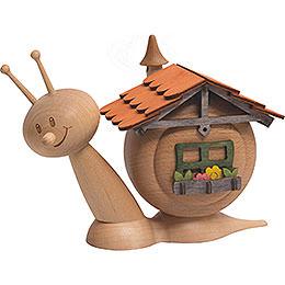 Smoker Snail Sunny House Snail  -  16cm / 6.3inch